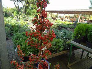 Für jede Gartensaison das Richtige